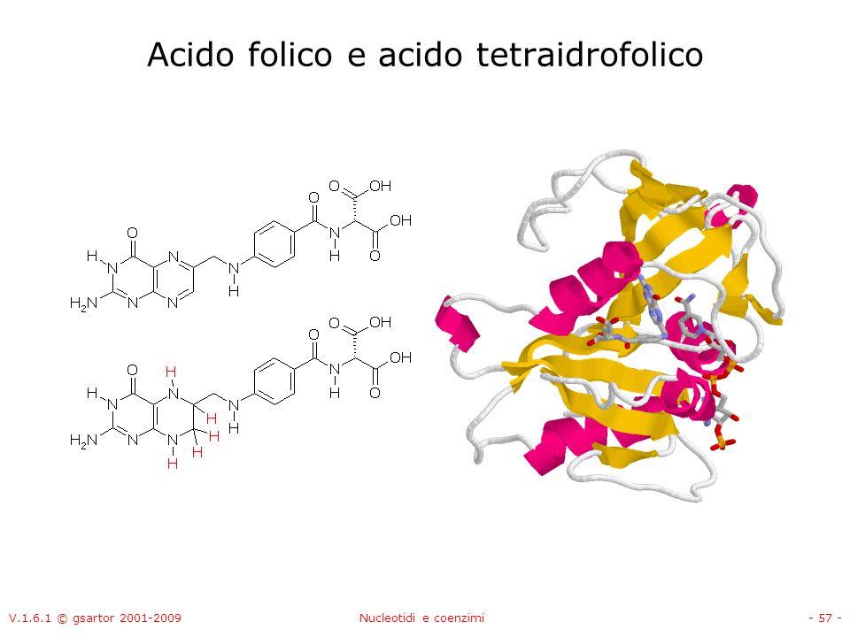 V.1.6.1 © gsartor 2001-2009Nucleotidi e coenzimi- 57 - Acido folico e acido tetraidrofolico