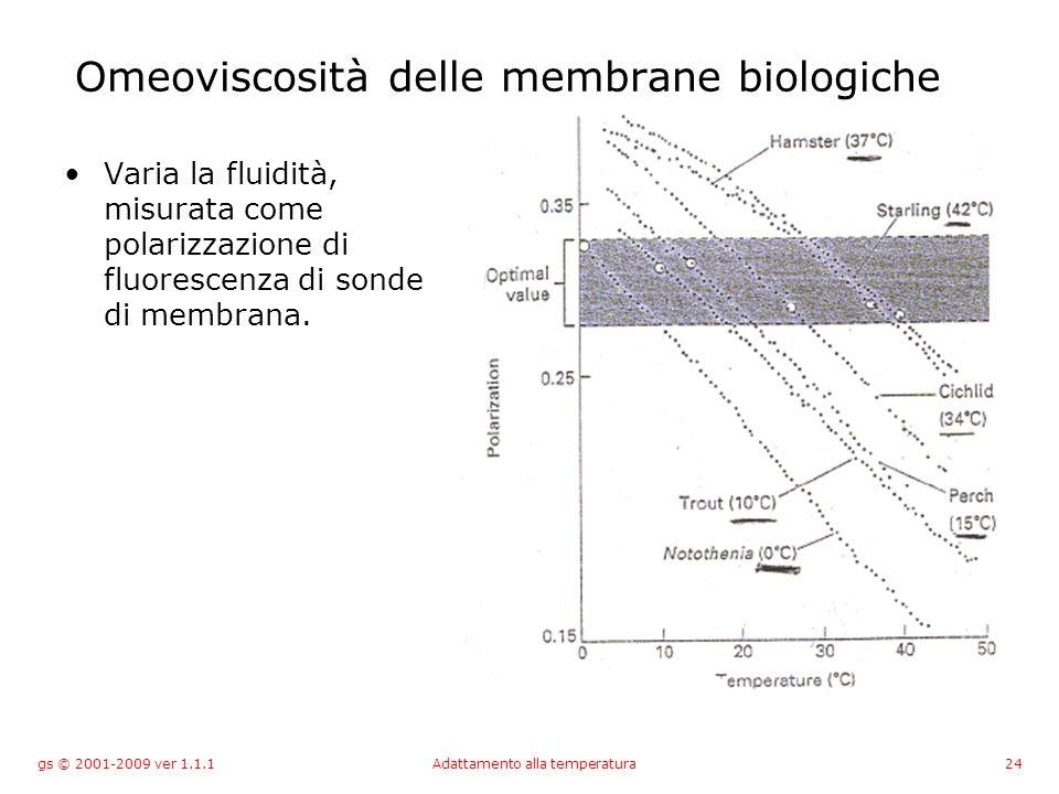 gs © 2001-2009 ver 1.1.1Adattamento alla temperatura24 Omeoviscosità delle membrane biologiche Varia la fluidità, misurata come polarizzazione di fluorescenza di sonde di membrana.