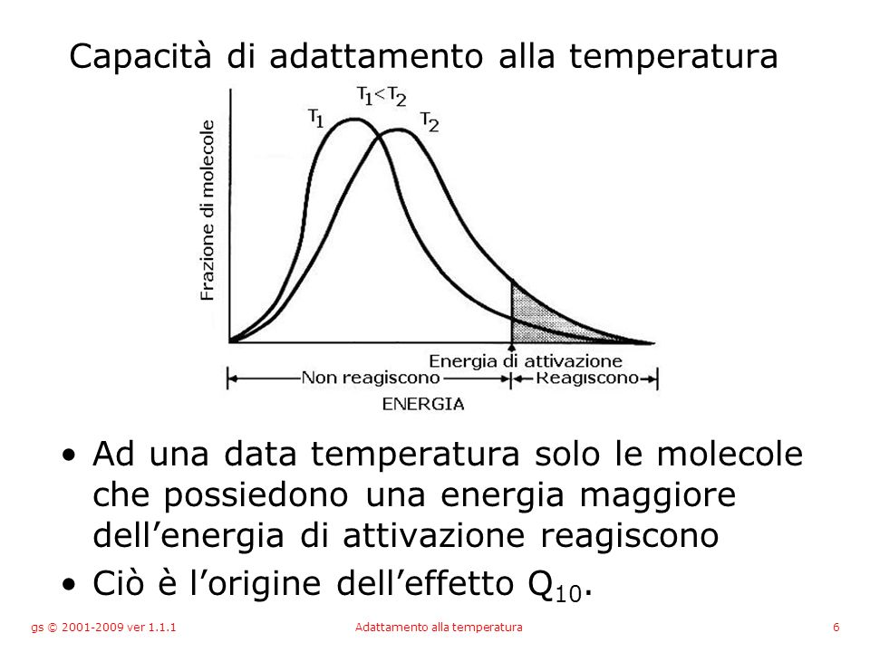 gs © 2001-2009 ver 1.1.1Adattamento alla temperatura6 Capacità di adattamento alla temperatura Ad una data temperatura solo le molecole che possiedono una energia maggiore dellenergia di attivazione reagiscono Ciò è lorigine delleffetto Q 10.
