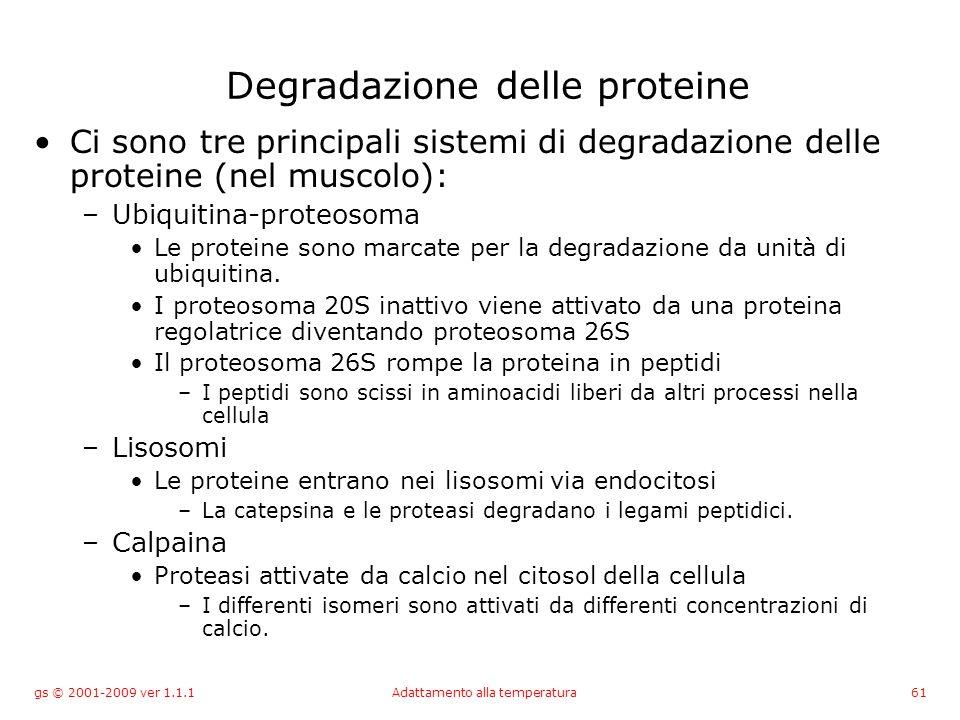 gs © 2001-2009 ver 1.1.1Adattamento alla temperatura61 Degradazione delle proteine Ci sono tre principali sistemi di degradazione delle proteine (nel muscolo): –Ubiquitina-proteosoma Le proteine sono marcate per la degradazione da unità di ubiquitina.