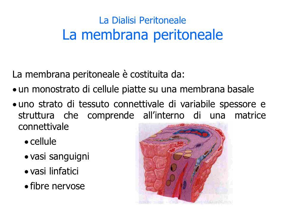 La membrana peritoneale è costituita da: un monostrato di cellule piatte su una membrana basale uno strato di tessuto connettivale di variabile spessore e struttura che comprende allinterno di una matrice connettivale cellule vasi sanguigni vasi linfatici fibre nervose La Dialisi Peritoneale La membrana peritoneale