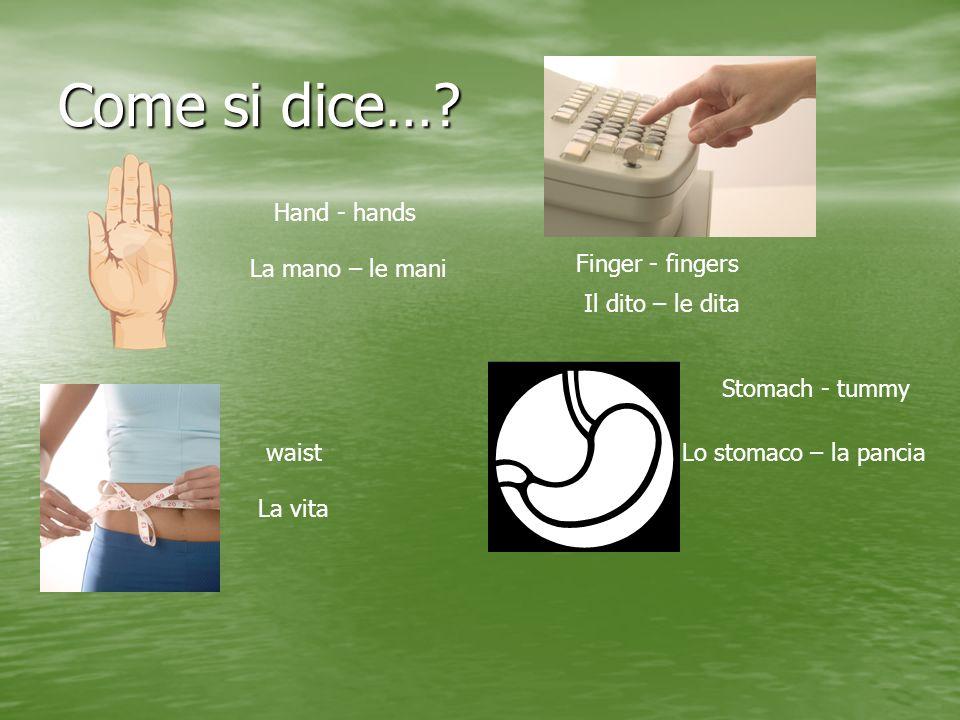 Come si dice…? Hand - hands La mano – le mani Finger - fingers Il dito – le dita waist La vita Stomach - tummy Lo stomaco – la pancia