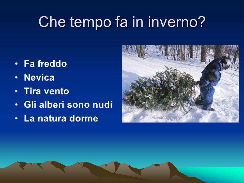 Che tempo fa in inverno? Fa freddo Nevica Tira vento Gli alberi sono nudi La natura dorme