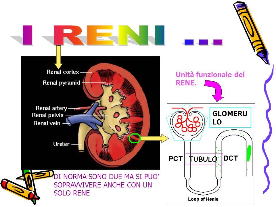 GLOMERU LO TUBULO Unità funzionale del RENE.
