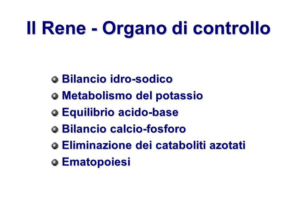 Il Rene - Organo di controllo Bilancio idro-sodico Metabolismo del potassio Equilibrio acido-base Bilancio calcio-fosforo Eliminazione dei cataboliti