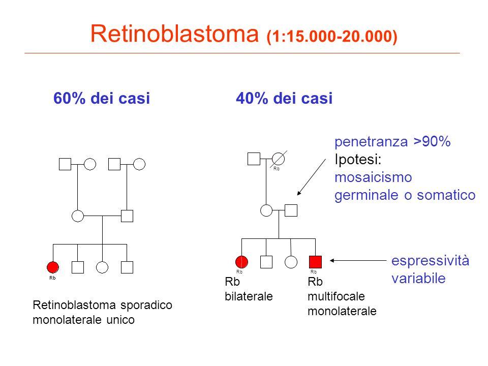 Retinoblastoma (1:15.000-20.000) Rb Retinoblastoma sporadico monolaterale unico Rb bilaterale Rb multifocale monolaterale 60% dei casi40% dei casi esp