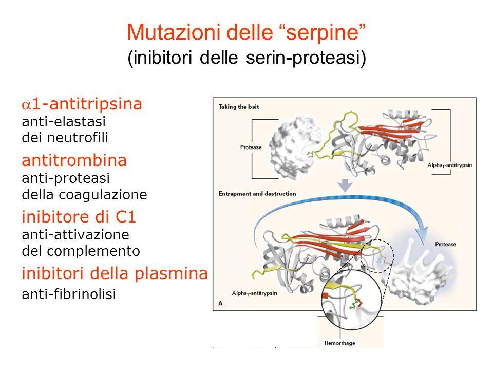 Mutazioni delle serpine (inibitori delle serin-proteasi) 1-antitripsina anti-elastasi dei neutrofili antitrombina anti-proteasi della coagulazione ini