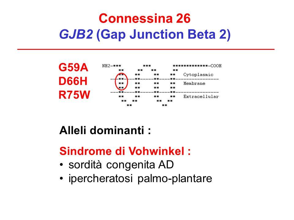 Connessina 26 GJB2 (Gap Junction Beta 2) G59A D66H R75W Alleli dominanti : Sindrome di Vohwinkel : sordità congenita AD ipercheratosi palmo-plantare