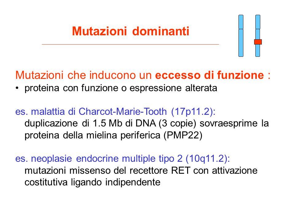 Mutazioni che inducono un eccesso di funzione : proteina con funzione o espressione alterata es. malattia di Charcot-Marie-Tooth (17p11.2): duplicazio