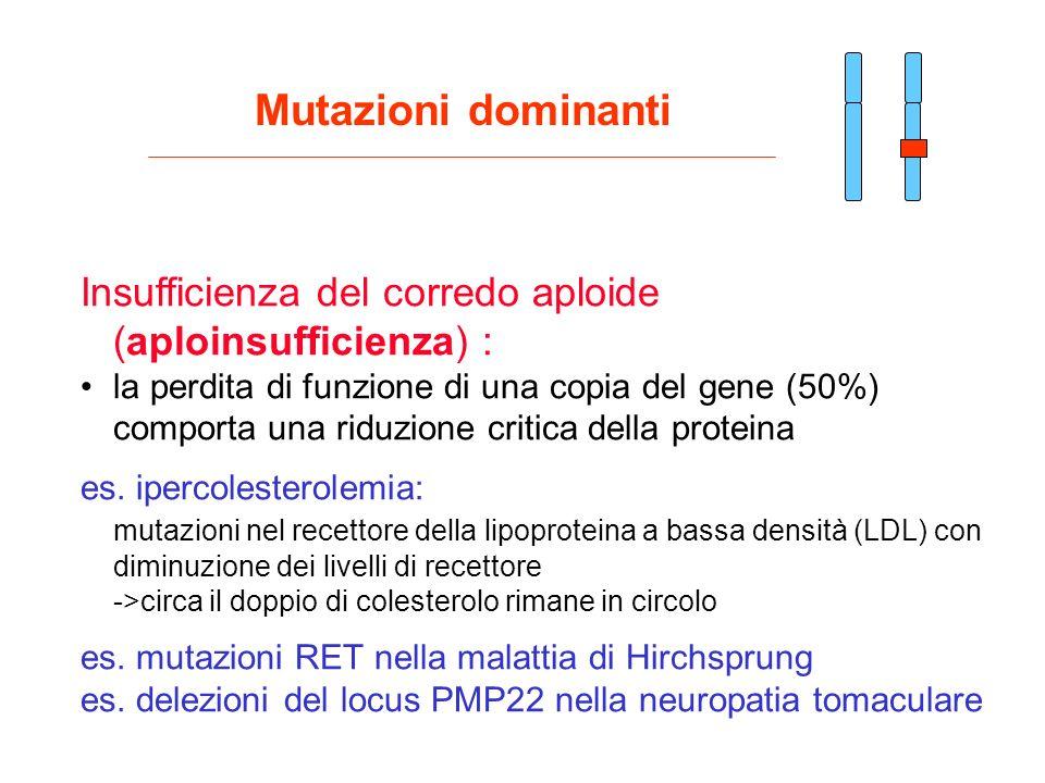 Insufficienza del corredo aploide (aploinsufficienza) : la perdita di funzione di una copia del gene (50%) comporta una riduzione critica della protei