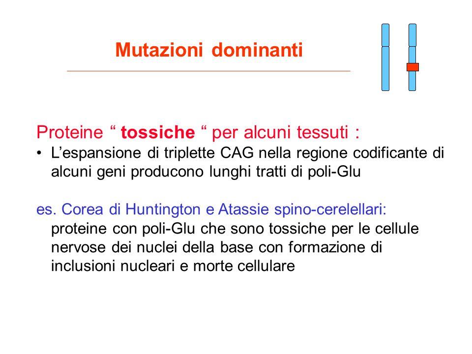 Proteine tossiche per alcuni tessuti : Lespansione di triplette CAG nella regione codificante di alcuni geni producono lunghi tratti di poli-Glu es. C