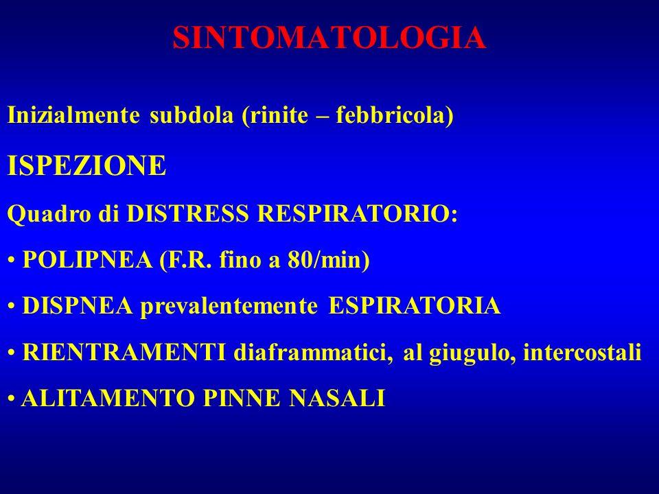 SINTOMATOLOGIA Inizialmente subdola (rinite – febbricola) ISPEZIONE Quadro di DISTRESS RESPIRATORIO: POLIPNEA (F.R. fino a 80/min) DISPNEA prevalentem