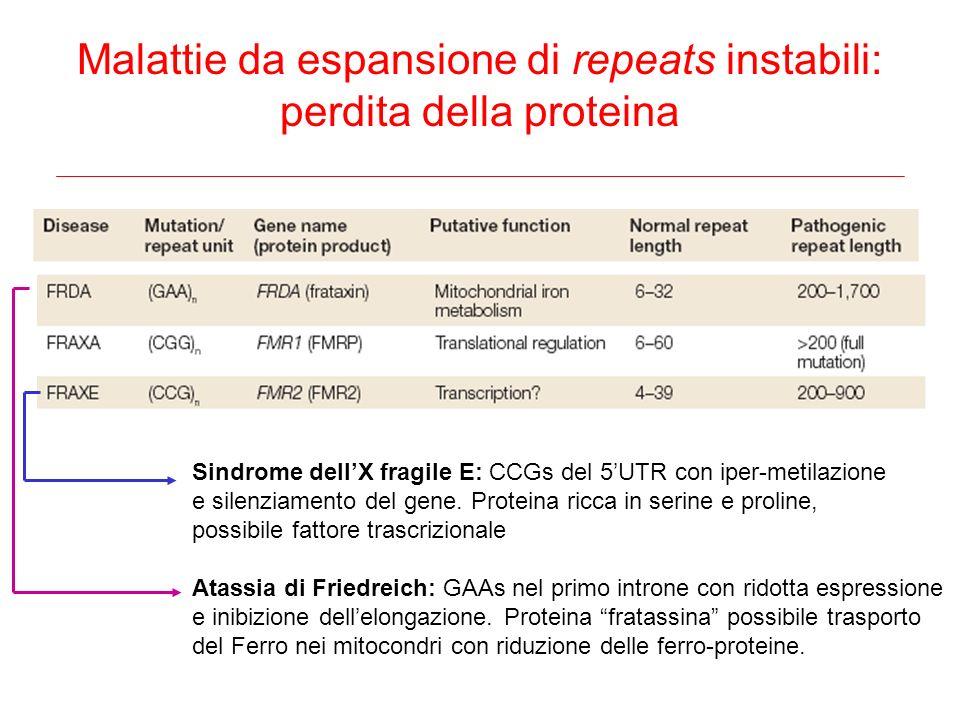 Malattie da espansione di repeats instabili: perdita della proteina Sindrome dellX fragile E: CCGs del 5UTR con iper-metilazione e silenziamento del g