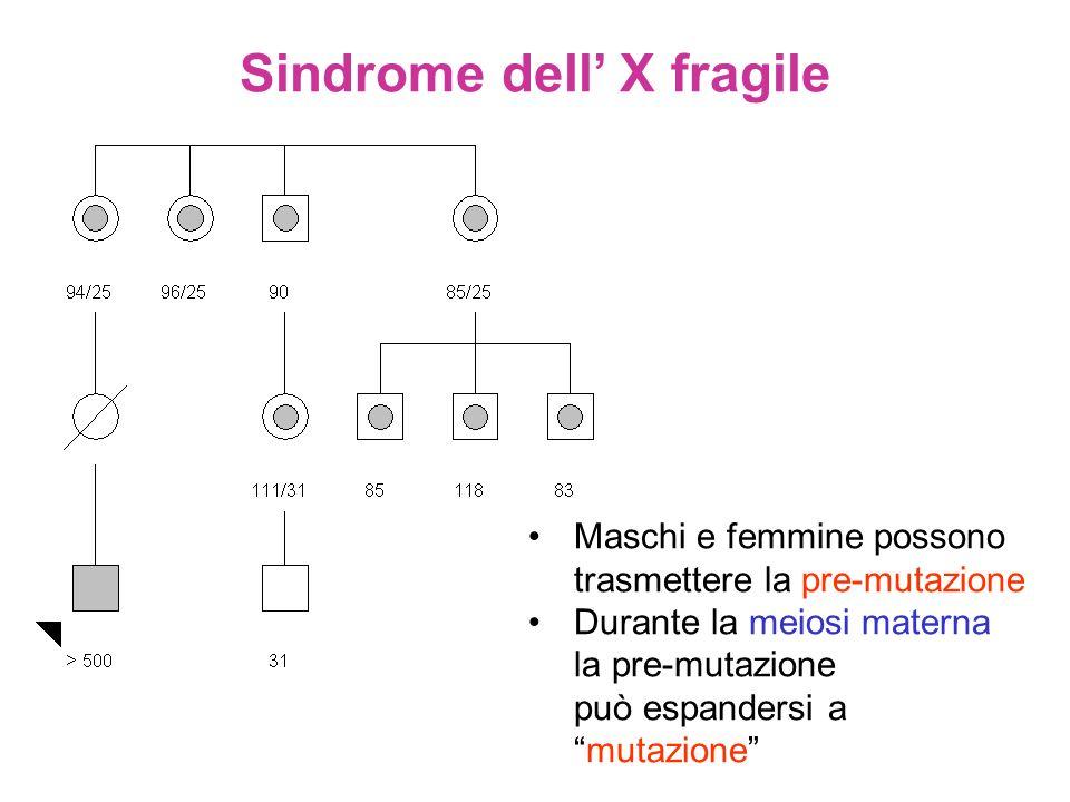 Maschi e femmine possono trasmettere la pre-mutazione Durante la meiosi materna la pre-mutazione può espandersi a mutazione