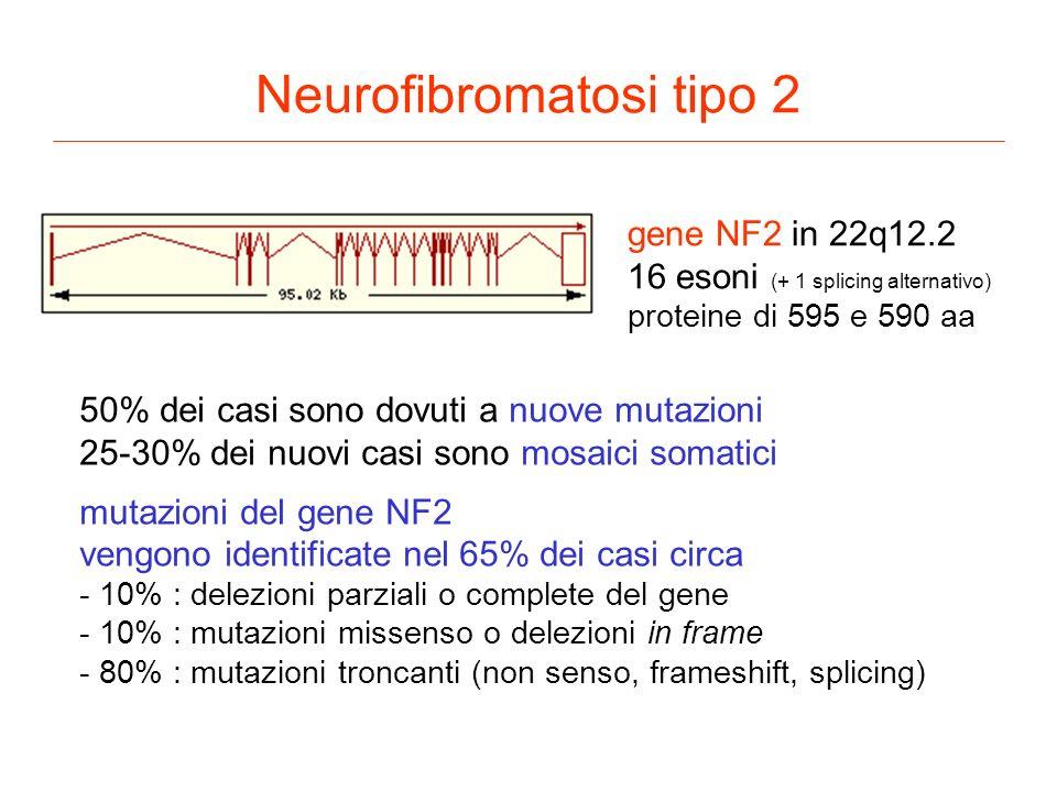 Neurofibromatosi tipo 2 gene NF2 in 22q12.2 16 esoni (+ 1 splicing alternativo) proteine di 595 e 590 aa 50% dei casi sono dovuti a nuove mutazioni 25