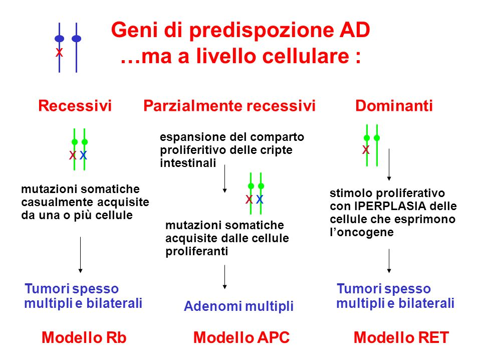 Geni di predispozione AD …ma a livello cellulare : X Recessivi Parzialmente recessivi Dominanti XX mutazioni somatiche casualmente acquisite da una o