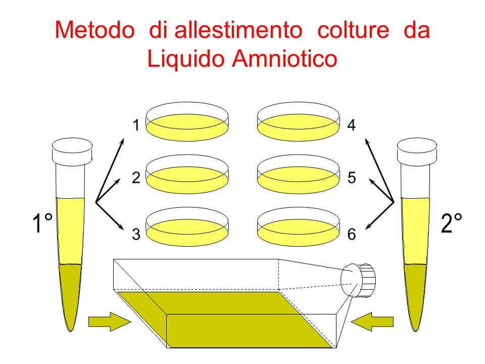 Metodo di allestimento colture da Liquido Amniotico 1 2 3 4 5 6 1°2°