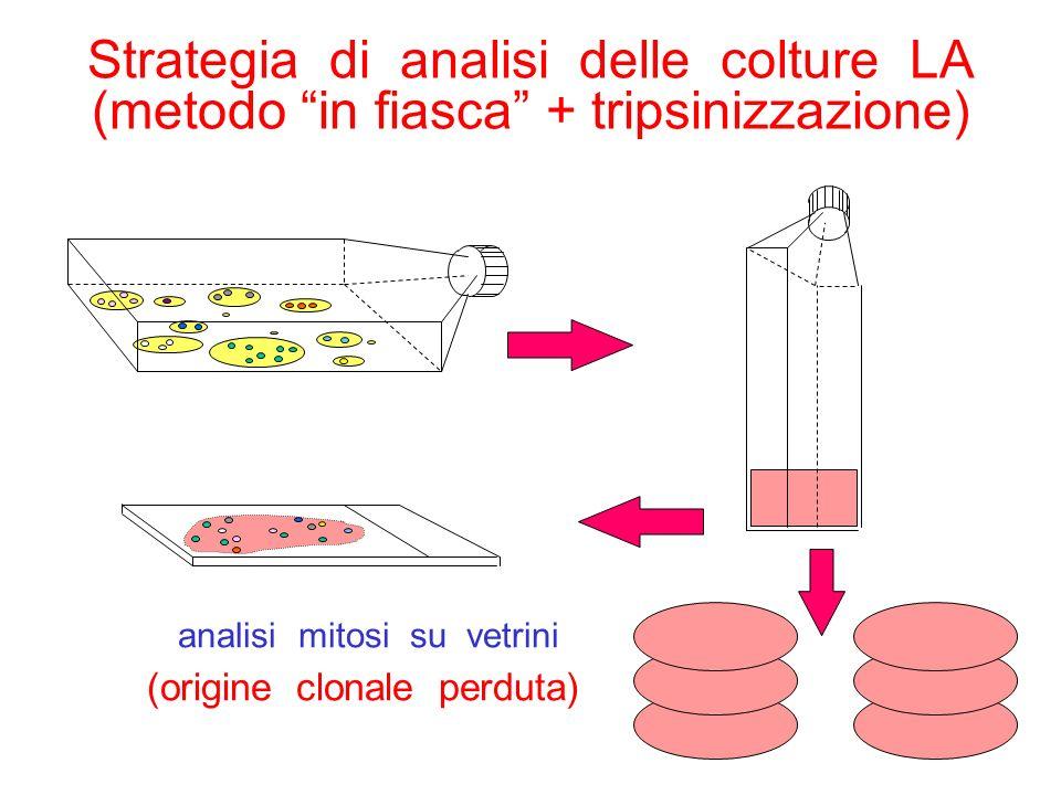 Strategia di analisi delle colture LA (metodo in fiasca + tripsinizzazione) analisi mitosi su vetrini (origine clonale perduta)
