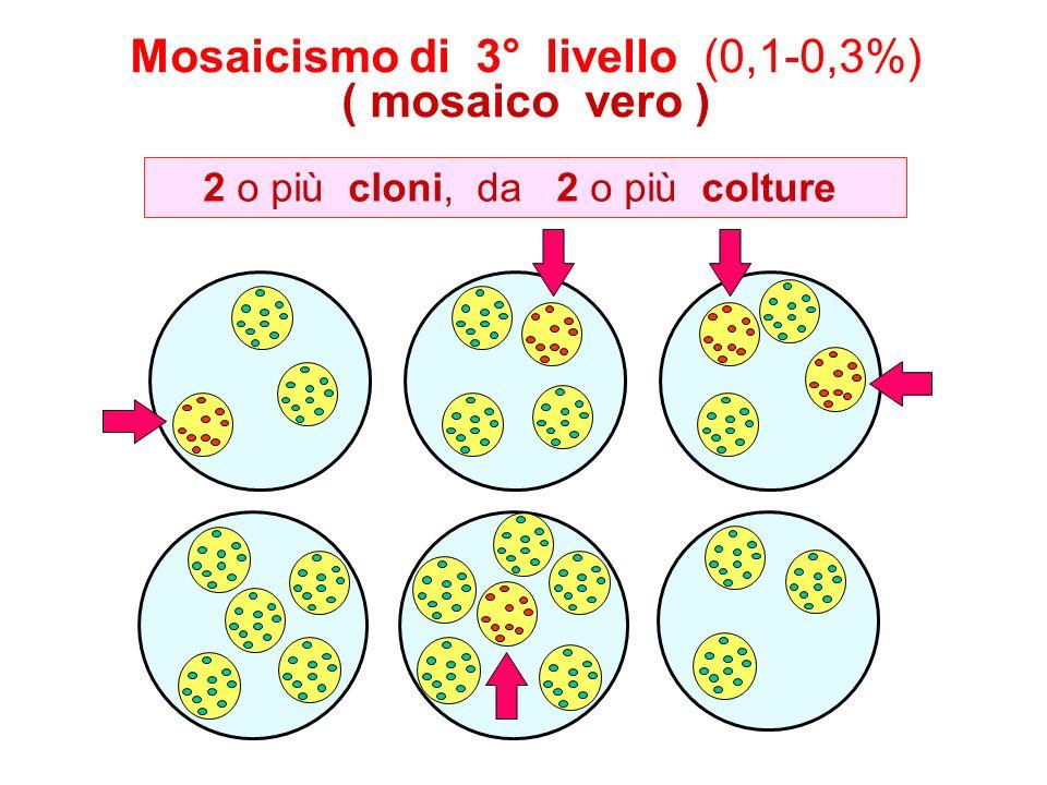 Mosaicismo di 3° livello (0,1-0,3%) ( mosaico vero ) 2 o più cloni, da 2 o più colture