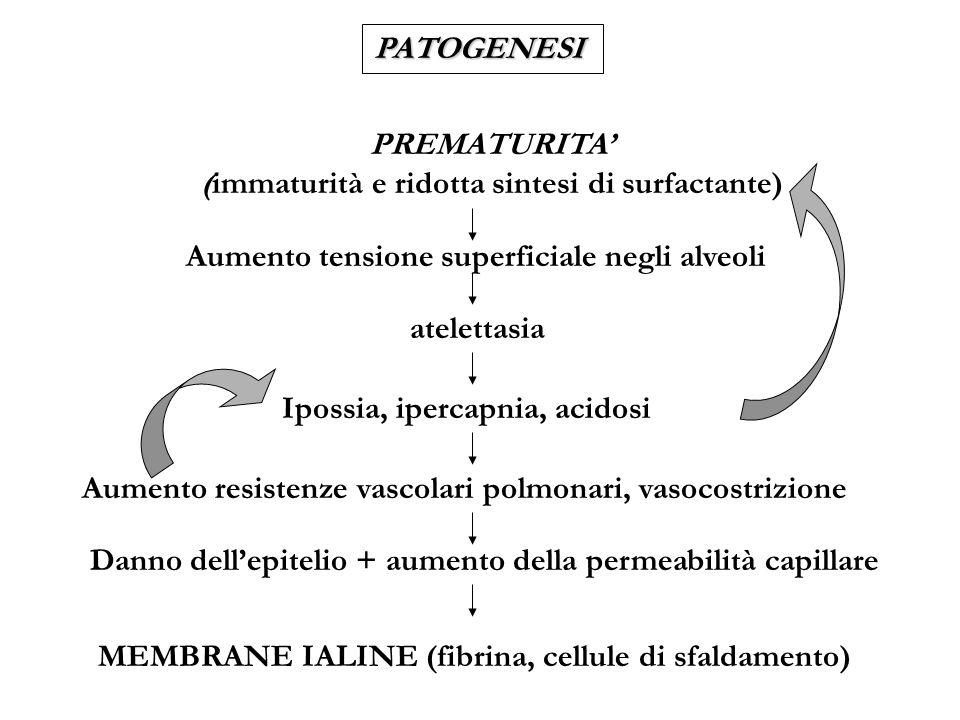 DIAGNOSI Rx TORACE: - aspetto a vetro smerigliato o reticolo-granulare - broncogramma aereo - volumi polmonari bassi EMOGASANALISI: - ipossia - ipercapnia - acidosi EMOCROMO: eventuali anemia, neutropenia o neutrofilia (sepsi), trombocitopenia INDICI DI INFEZIONE (proteina C-reattiva) ESAMI COLTURALI: spesso presenza di infezione GLICEMIA ed altri esami (es.