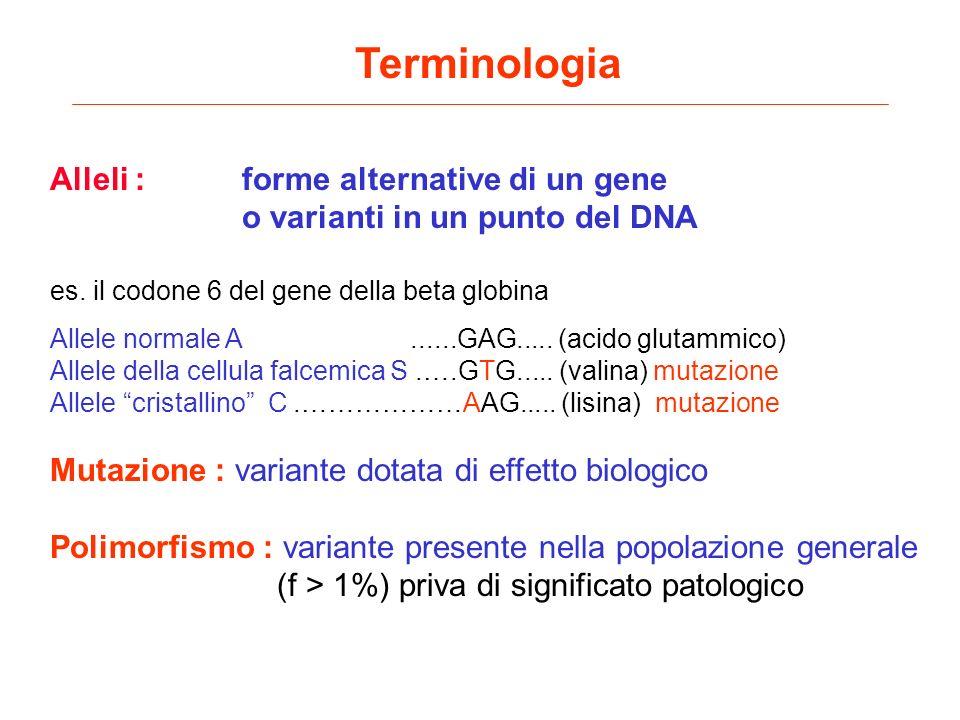 Terminologia Alleli :forme alternative di un gene o varianti in un punto del DNA es. il codone 6 del gene della beta globina Allele normale A......GAG
