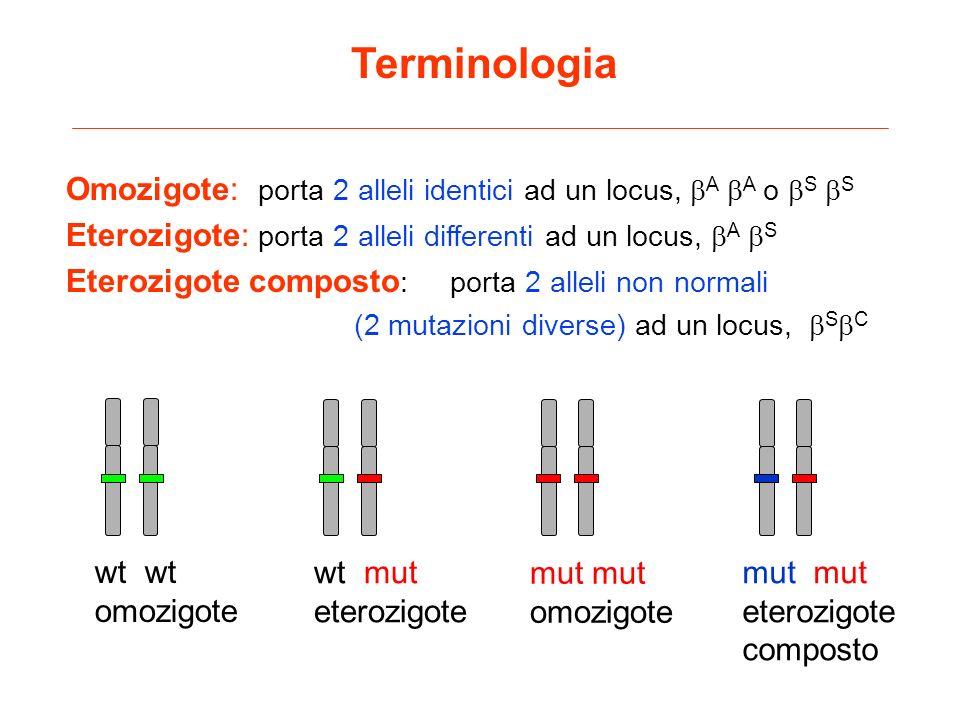 Terminologia Omozigote: porta 2 alleli identici ad un locus, A A o S S Eterozigote: porta 2 alleli differenti ad un locus, A S Eterozigote composto :p