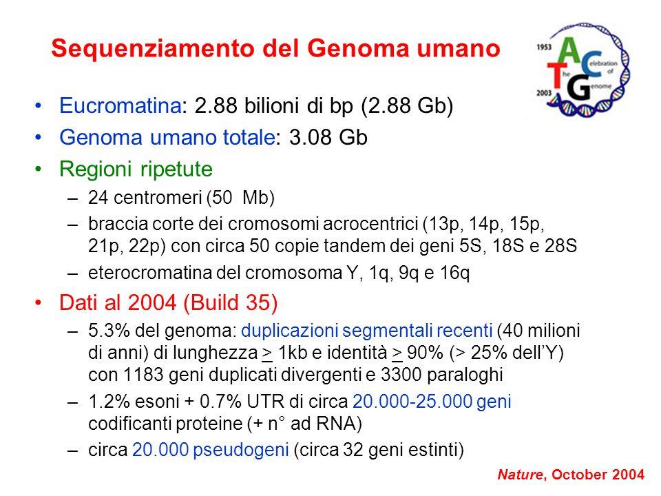 Sequenziamento del Genoma umano Eucromatina: 2.88 bilioni di bp (2.88 Gb) Genoma umano totale: 3.08 Gb Regioni ripetute –24 centromeri (50 Mb) –bracci
