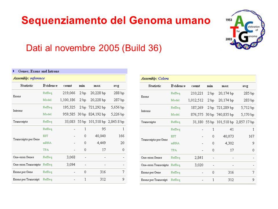 Sequenziamento del Genoma umano Dati al novembre 2005 (Build 36)