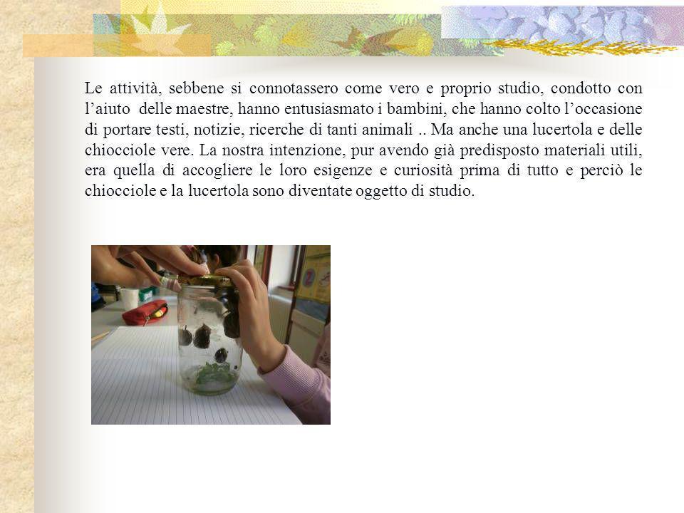 Abbiamo perciò proposto ai bambini un approfondimento cognitivo delle abitudini della farfalla. Cosa usa per difendersi (e in che modo si difende) Cos
