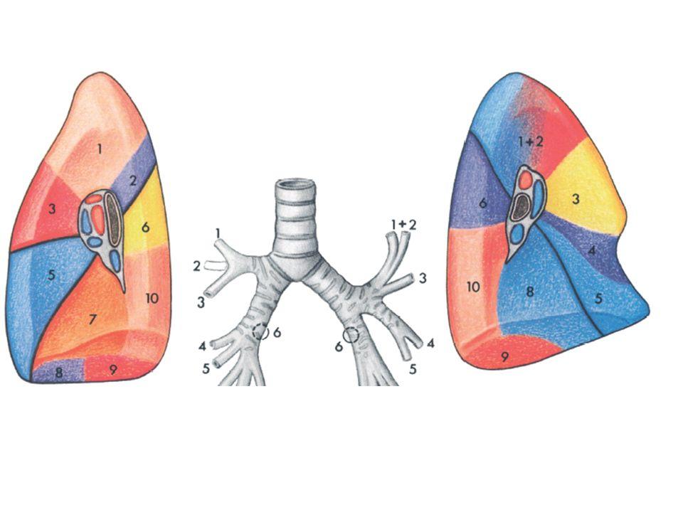 Anatomia patologica Dal punto di vista anatomo-topografico le neoplasie broncopolmonari si possono classificare in due categorie: neoplasie che hanno rapporto con lalbero bronchiale (sono prevalentemente neoplasie centrali o parailari); neoplasie a localizzazione parenchimale periferica