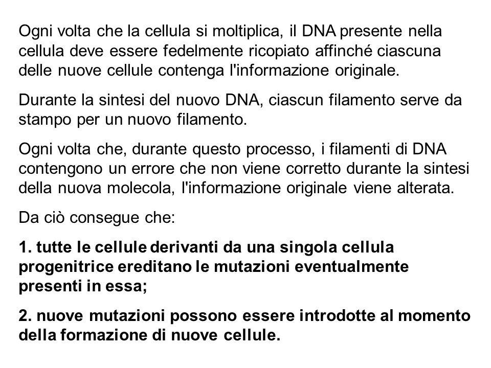 Ogni volta che la cellula si moltiplica, il DNA presente nella cellula deve essere fedelmente ricopiato affinché ciascuna delle nuove cellule contenga