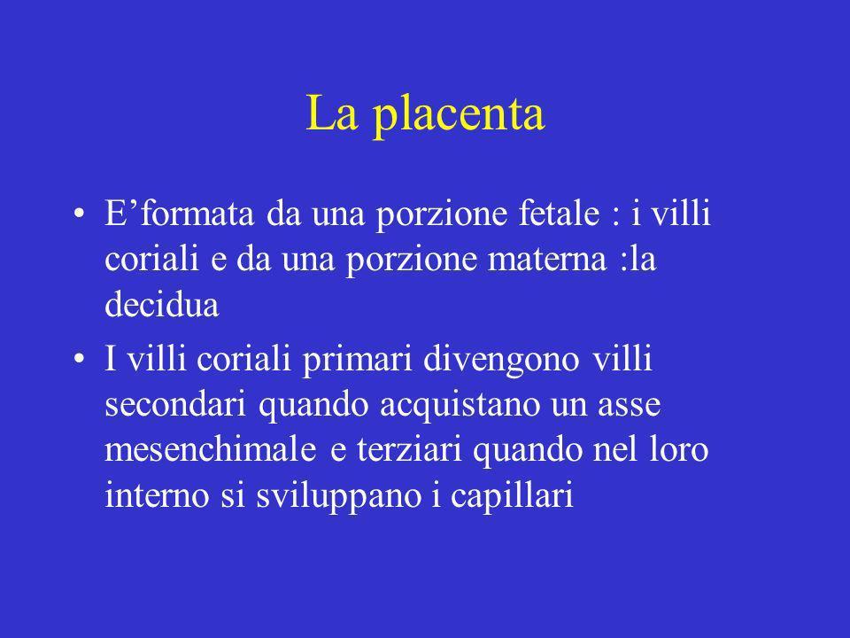 La placenta Eformata da una porzione fetale : i villi coriali e da una porzione materna :la decidua I villi coriali primari divengono villi secondari