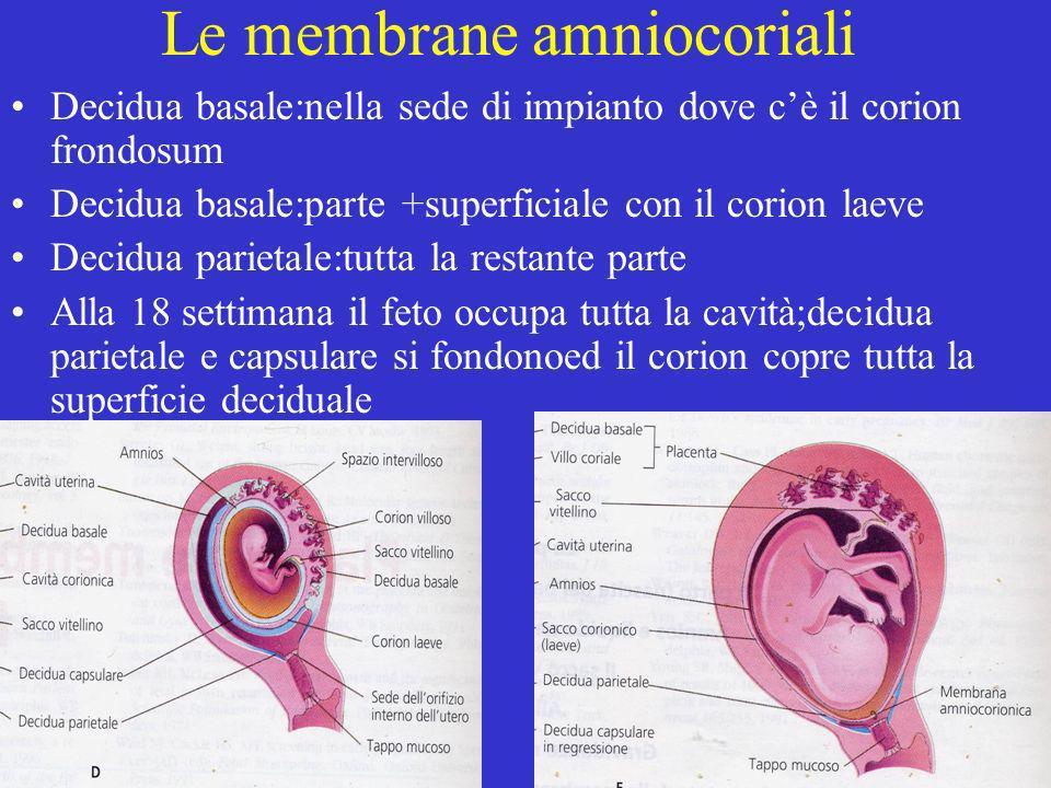 Le membrane amniocoriali Decidua basale:nella sede di impianto dove cè il corion frondosum Decidua basale:parte +superficiale con il corion laeve Deci