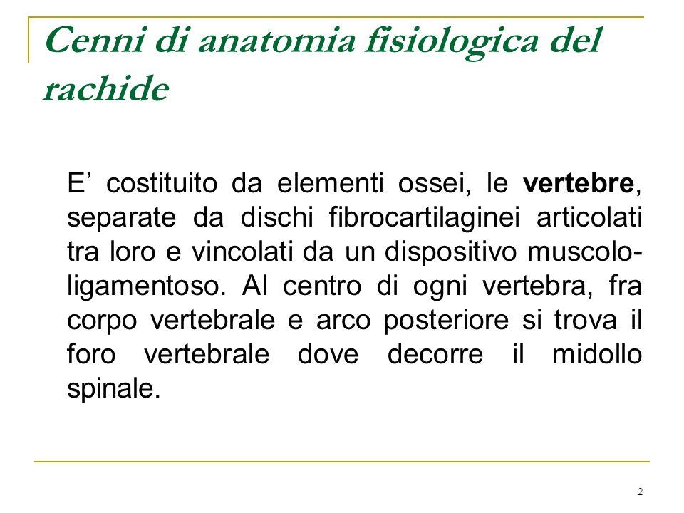 2 E costituito da elementi ossei, le vertebre, separate da dischi fibrocartilaginei articolati tra loro e vincolati da un dispositivo muscolo- ligamen