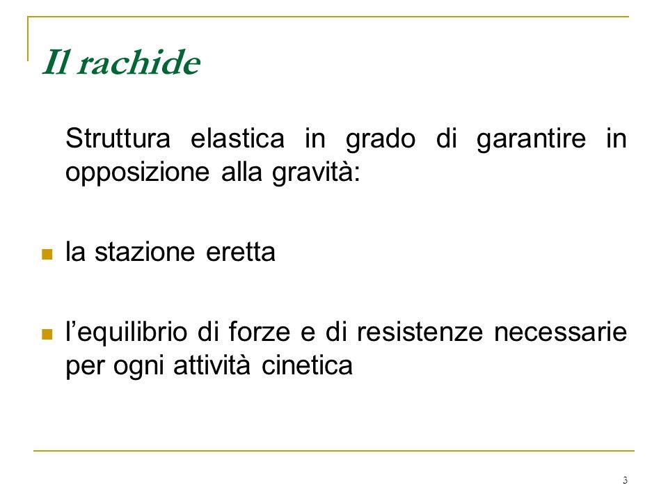 3 Il rachide Struttura elastica in grado di garantire in opposizione alla gravità: la stazione eretta lequilibrio di forze e di resistenze necessarie