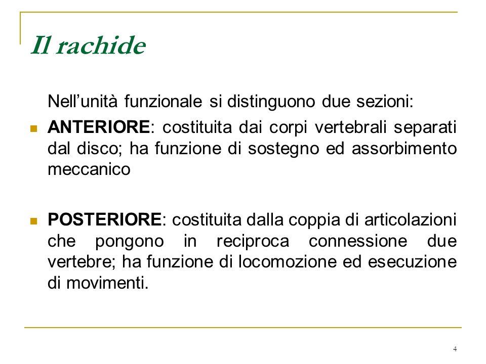 4 Il rachide Nellunità funzionale si distinguono due sezioni: ANTERIORE: costituita dai corpi vertebrali separati dal disco; ha funzione di sostegno e