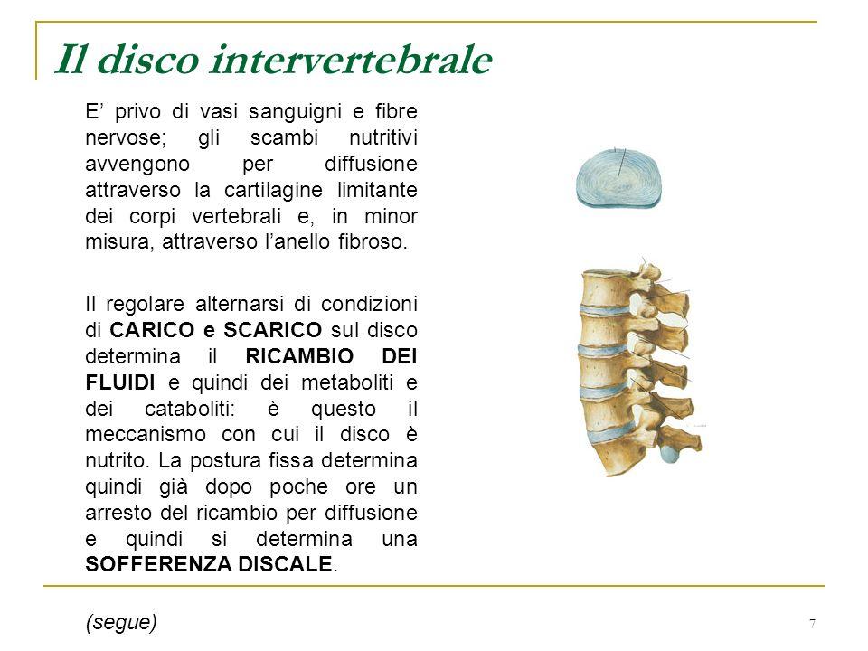 7 Il disco intervertebrale E privo di vasi sanguigni e fibre nervose; gli scambi nutritivi avvengono per diffusione attraverso la cartilagine limitant