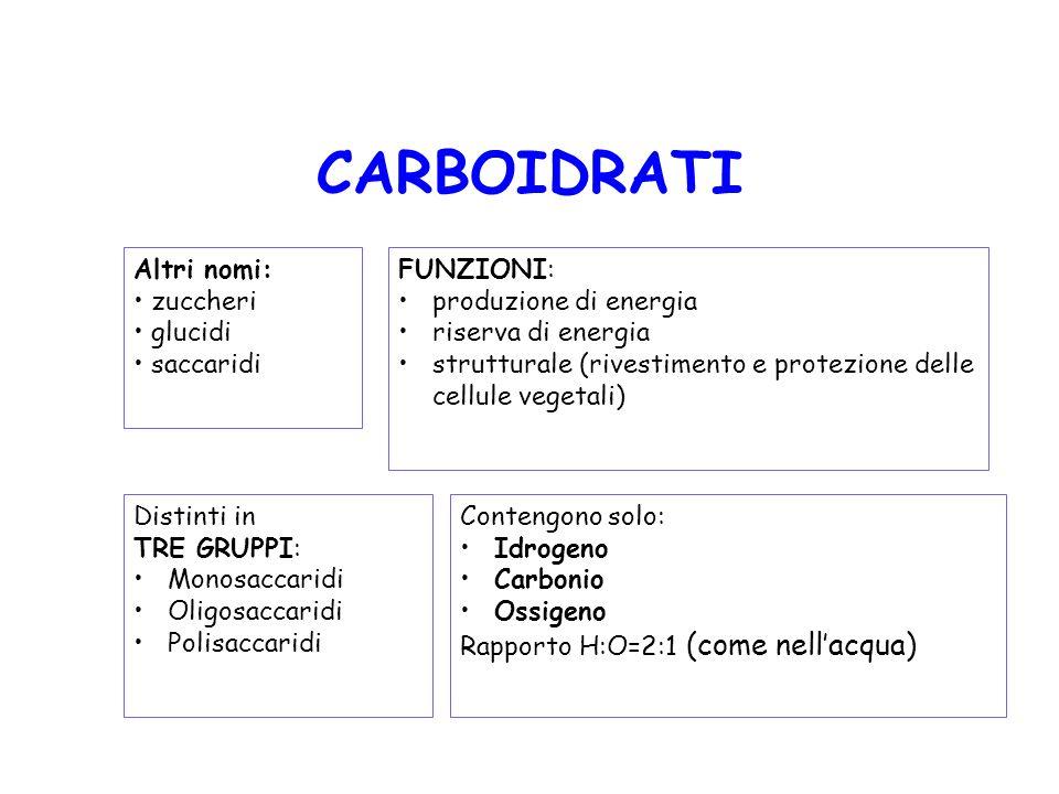 CARBOIDRATI Altri nomi: zuccheri glucidi saccaridi Contengono solo: Idrogeno Carbonio Ossigeno Rapporto H:O=2:1 (come nellacqua) FUNZIONI: produzione