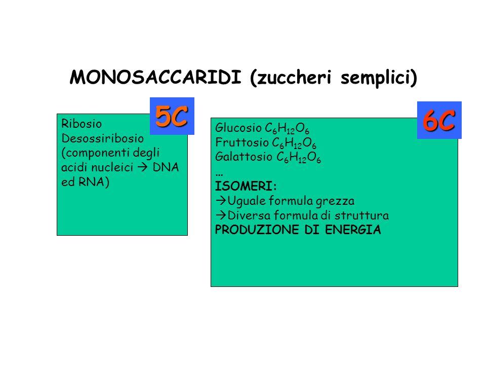MONOSACCARIDI (zuccheri semplici) Ribosio Desossiribosio (componenti degli acidi nucleici DNA ed RNA) Glucosio C 6 H 12 O 6 Fruttosio C 6 H 12 O 6 Gal