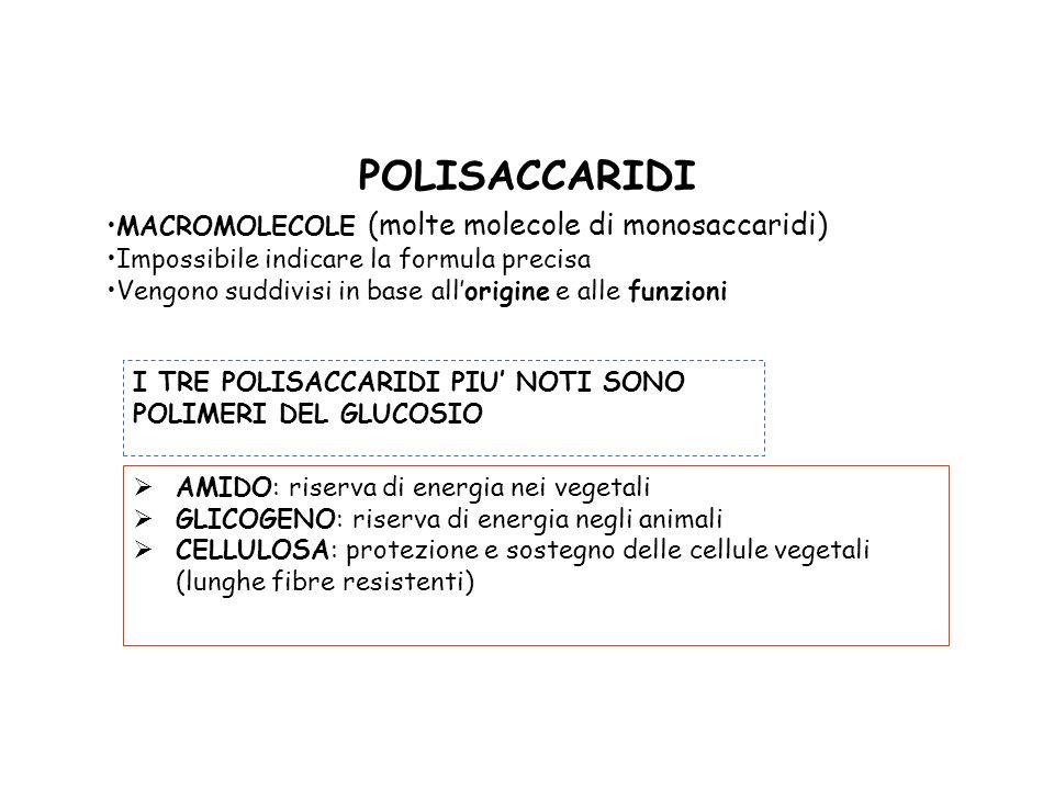 POLISACCARIDI MACROMOLECOLE (molte molecole di monosaccaridi) Impossibile indicare la formula precisa Vengono suddivisi in base allorigine e alle funz