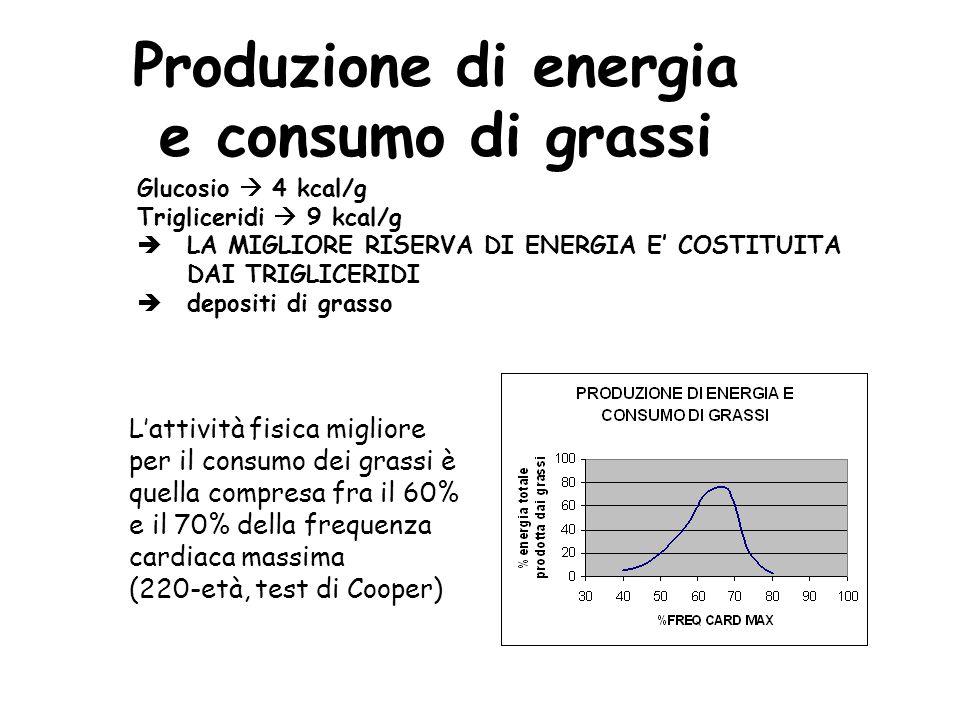 Produzione di energia e consumo di grassi Glucosio 4 kcal/g Trigliceridi 9 kcal/g LA MIGLIORE RISERVA DI ENERGIA E COSTITUITA DAI TRIGLICERIDI deposit