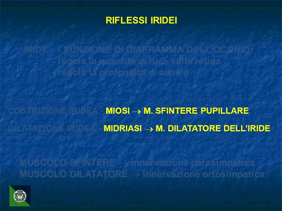 RIFLESSI IRIDEI IRIDE FUNZIONE DI DIAFRAMMA DELLOCCHIO: - regola la quantità di luce sulla retina - regola la profondità di campo COSTRIZIONE IRIDEA -