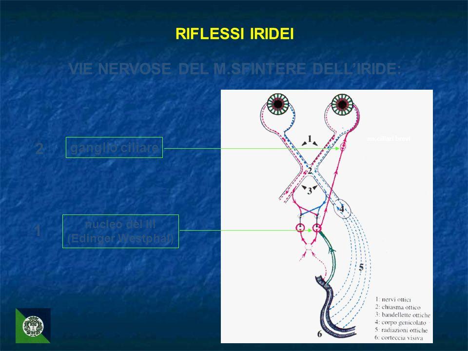 RIFLESSI IRIDEI VIE NERVOSE DEL M.SFINTERE DELLIRIDE: nucleo del III (Edinger Westphal) ganglio ciliare 1 2 nn.ciliari brevi