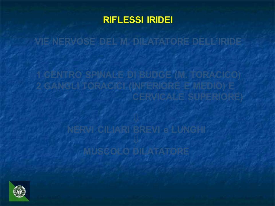 RIFLESSI IRIDEI VIE NERVOSE DEL M. DILATATORE DELLIRIDE 1 CENTRO SPINALE DI BUDGE (M. TORACICO) 2 GANGLI TORACICI (INFERIORE E MEDIO) E CERVICALE SUPE