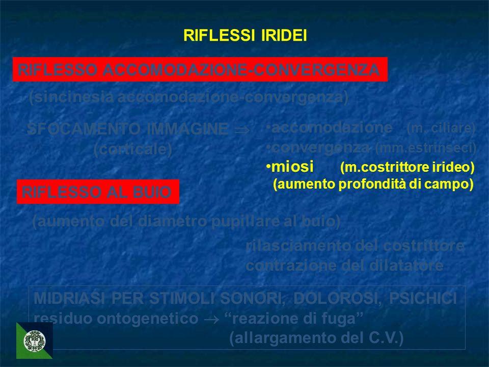 RIFLESSI IRIDEI RIFLESSO ACCOMODAZIONE-CONVERGENZA (sincinesia accomodazione-convergenza) SFOCAMENTO IMMAGINE (corticale) accomodazione (m. ciliare) c
