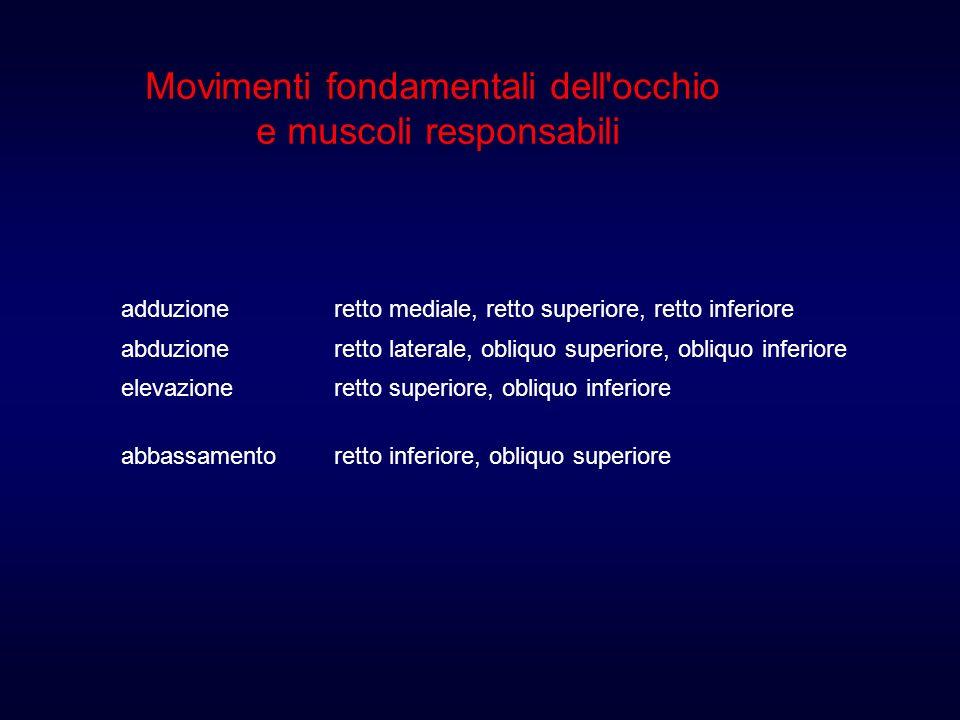 Movimenti fondamentali dell occhio e muscoli responsabili adduzioneretto mediale, retto superiore, retto inferiore abduzioneretto laterale, obliquo superiore, obliquo inferiore elevazioneretto superiore, obliquo inferiore abbassamentoretto inferiore, obliquo superiore