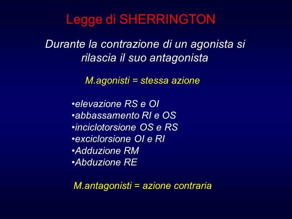 M.agonisti = stessa azione elevazione RS e OI abbassamento RI e OS inciclotorsione OS e RS exciclorsione OI e RI Adduzione RM Abduzione RE M.antagonis