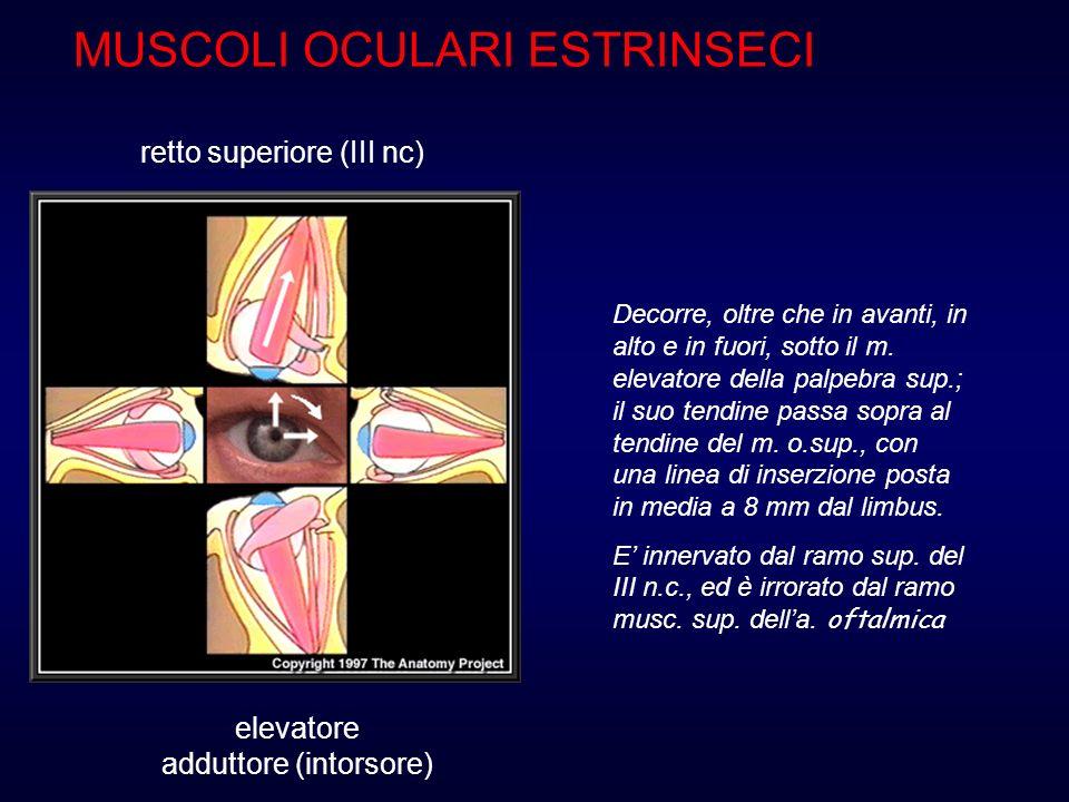 Si ricerca in Visione Binoculare e può essere: Convergente Divergente Verticale Langolo strabico è massimo nel campo di azione del m.
