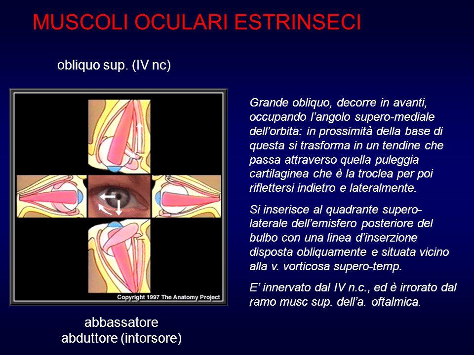 E unalterazione dellequilibrio muscolare con conseguente deviazione più o meno marcata dei bulbi oculari per cui gli assi visivi non sono allineati nel punto di fissazione Che cos è lo strabismo.