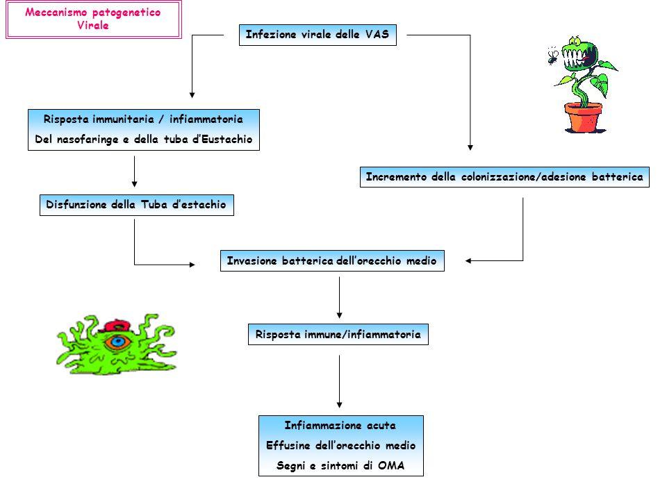 Infezione virale delle VAS Risposta immunitaria / infiammatoria Del nasofaringe e della tuba dEustachio Incremento della colonizzazione/adesione batte